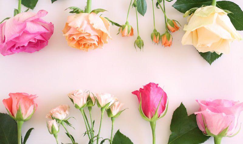 花の名前や特徴・花言葉など
